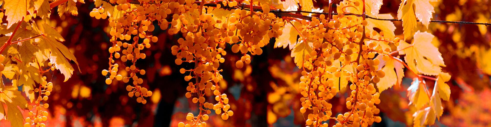 Hrozny - podzim